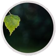 Round Beach Towel featuring the photograph Backlit Shiny Leaf by Kennerth and Birgitta Kullman