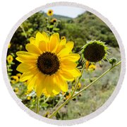 Backlit Sunflower Aka Helianthus Round Beach Towel