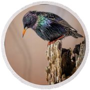 Backyard Birds European Starling Square Round Beach Towel