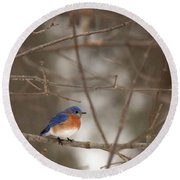 Backyard Blue Round Beach Towel