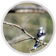 Backyard Blue Jay Round Beach Towel