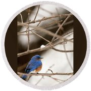 Backyard Bluebird Round Beach Towel