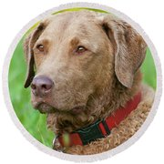 Round Beach Towel featuring the photograph Bailee 1149 by Guy Whiteley