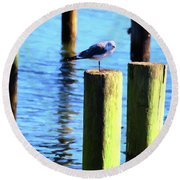 Round Beach Towel featuring the photograph Balanced by Jan Amiss Photography