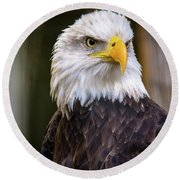 Bald Eagle Round Beach Towel by Lisa L Silva