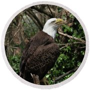 Bald Eagle #7 Round Beach Towel
