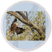 Bald Eagle Catch Of The Day  Round Beach Towel