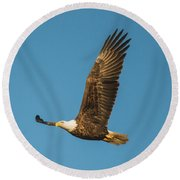 Bald Eagle Fly-by Round Beach Towel by Jeff at JSJ Photography