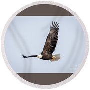 Bald Eagle Flying Over Horicon Marsh Round Beach Towel