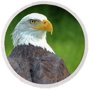 Bald Eagle Round Beach Towel by Franziskus Pfleghart