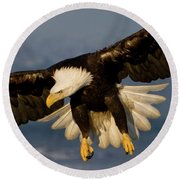 Bald Eagle In Action Round Beach Towel