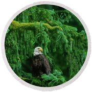 Round Beach Towel featuring the photograph Bald Eagle In Temperate Rainforest Alaska Endangered Species by Dave Welling