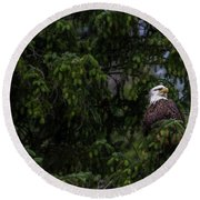 Round Beach Towel featuring the photograph Bald Eagle In The Tree by Timothy Latta