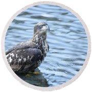 Bald Eagle Juvenile Round Beach Towel
