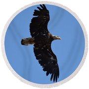 Bald Eagle Juvenile Soaring Round Beach Towel