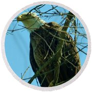 Bald Eagle Keeping Guard Round Beach Towel
