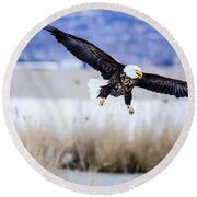 Round Beach Towel featuring the photograph Bald Eagle Landing by Bryan Carter