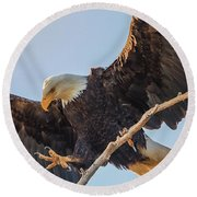 Bald Eagle Landing Round Beach Towel