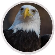 Bald Eagle Looking Right Round Beach Towel