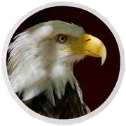 Bald Eagle - Majestic Portrait Round Beach Towel