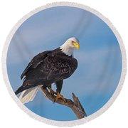 Bald Eagle Majesty Round Beach Towel