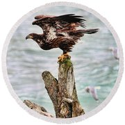 Bald Eagle On Driftwood At The Beach Round Beach Towel by Peggy Collins