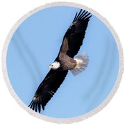 Bald Eagle Overhead  Round Beach Towel