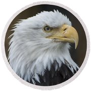 Bald Eagle Portrait Round Beach Towel