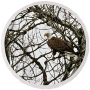 Bald Eagle Ready For Flight Round Beach Towel by Michael Peychich