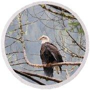Bald Eagle Resting Round Beach Towel
