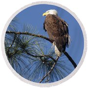 Bald Eagle Round Beach Towel by Sally Weigand