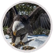 Bald Eagle Spread Round Beach Towel