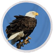 Bald Eagle Squared Round Beach Towel