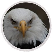 Bald Eagle Stare  Round Beach Towel
