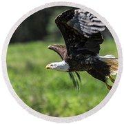 Bald Eagle-3372 Round Beach Towel