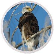 Bald Eagle With Pogo Nip Round Beach Towel