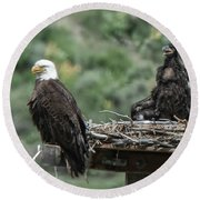 Bald Eaglet Cooling Off On A Hot Spring Day Round Beach Towel