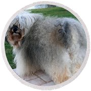 Round Beach Towel featuring the photograph ball of fur Havanese dog by Sally Weigand