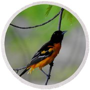 Baltimore Oriole Round Beach Towel by Betty-Anne McDonald