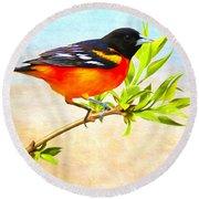 Baltimore Oriole Bird Round Beach Towel