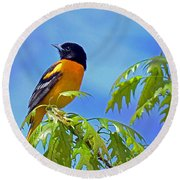 Round Beach Towel featuring the photograph Baltimore Oriole In An Oak Tree by Rodney Campbell