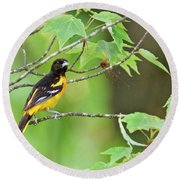 Baltimore Oriole Round Beach Towel by Michael Peychich