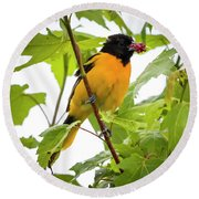 Round Beach Towel featuring the photograph Baltimore Oriole With Raspberry  by Ricky L Jones