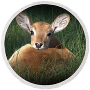 Bambi Round Beach Towel by Kim Henderson