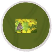 Banded Hairstreak On Coreopsis Round Beach Towel