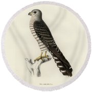 Round Beach Towel featuring the drawing Banded Kestrel by J D L Franz Wagner