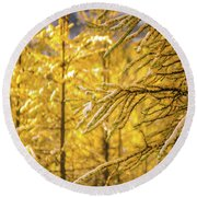 Banff Larch Valley Forest Of Gold Round Beach Towel