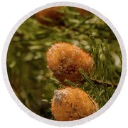 Round Beach Towel featuring the photograph Banksia by Werner Padarin