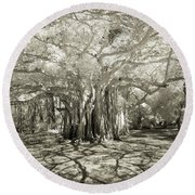 Banyan Strangler Fig Tree Round Beach Towel