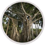 Banyan Tree At Bonnet House Round Beach Towel